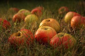 спас яблочный