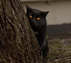 кошки-кот нелюб-40