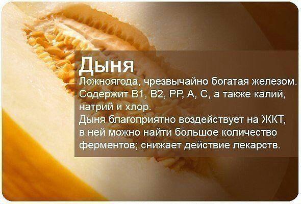 дыня-