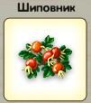 1-шиповник-3-9