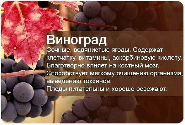 виноград)