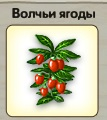 1-волк-волчьи ягоды-3-9
