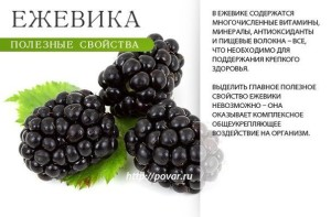 ежевика-3