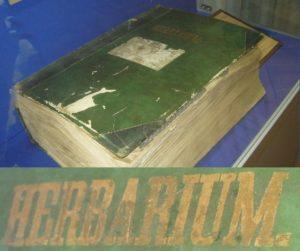 2-гербариум-2020