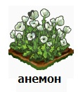 1-анемон-Запорожье