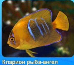 1-ангел-рыба-Аквантика