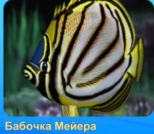 1-бабочка-рыба-Аквантика