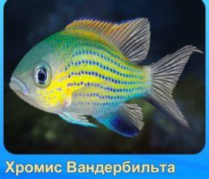 -хромис-рыба-Аквантика