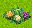 1-капуста цветная- Территория Фермеров-