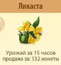 1-ликаста-орхидея- Территория Фермеров