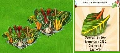 1-мангольд-новые земли