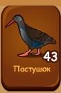 1-пастушок-птички-домовята