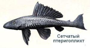 1-птеригоплихт-на рыбалку