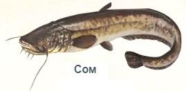 1-сом-На рыбалку