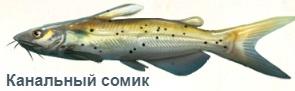 1-сом кан-на рыбалку