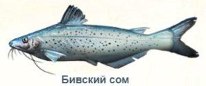 1-сом озеро Бива--на рыбалку