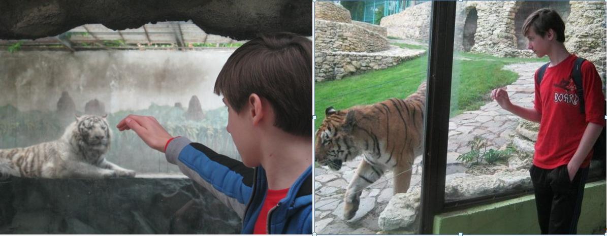 -тигр-