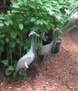 Цапли в Краснодарском сафари-парке, фото Наты