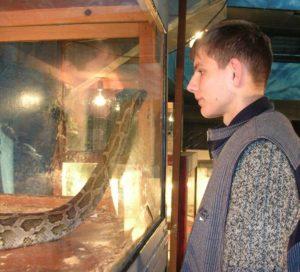 1-змеи-