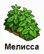 1-мелисса-Запорожье