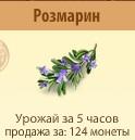 1-розмарин- Территория Фермеров