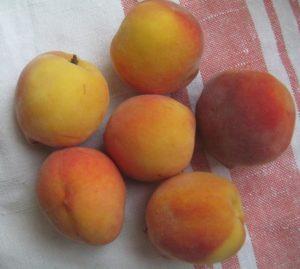 Персик, фото Наты