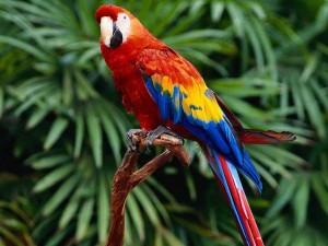 1-попугай