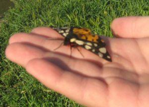 Мой воспитанник приручает бабочку