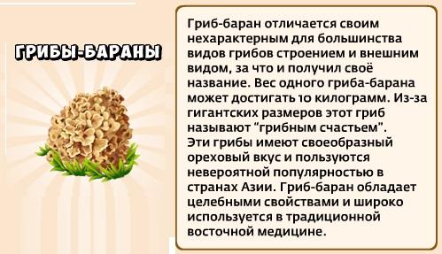 1-бараны-грибы-грибники и кланы