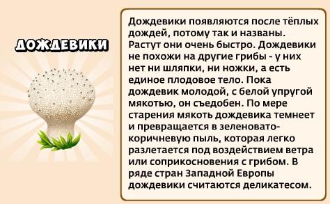 1-дождевик-грибники и кланы