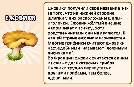 1-ежовики-грибники и кланы