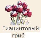 1-гиацинтовый гриб-фанта-Клондайк