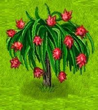 1-гилоцериус - Драконий фрукт- ТФ