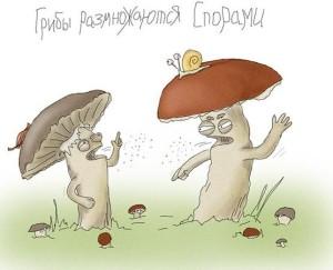грибы-