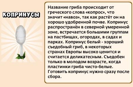 1-копринусы-Грибы и кланы