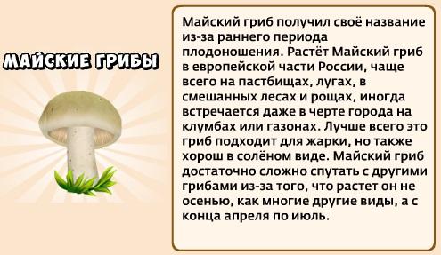 1-майские грибы-Грибы и кланы