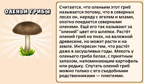 1-оленьи грибы-грибники и кланы