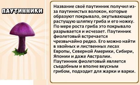 1-паутинник-Грибы и кланы