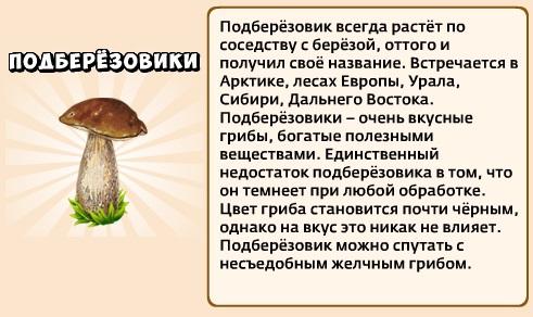 1-подберезовики-Грибы и кланы