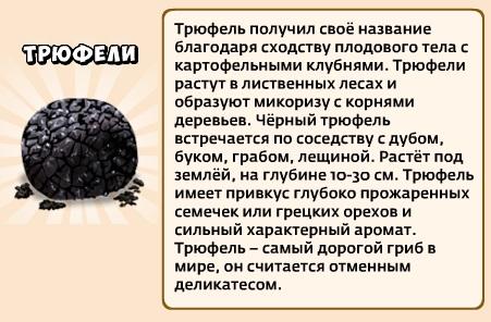 1-трюфели-грибники и кланы