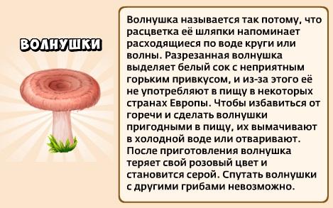 1-волнушки-грибники и кланы