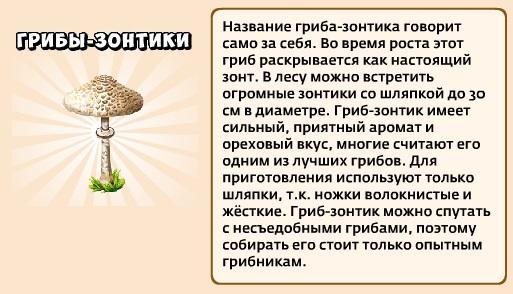 1-зонтики грибы-грибники и кланы