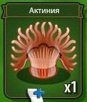 1-актиния-рак-отшельник земли