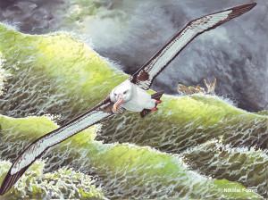 Альбатрос, Худ.Н.Фомин
