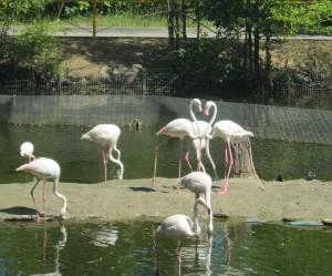 Фламинго в Ростовском зоопарке