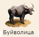 1-буйвол-Клондайк