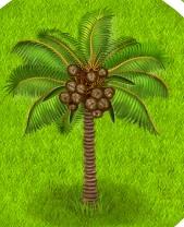1-кокос- Территория Фермеров