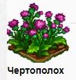 1-чертополох-Запорожье