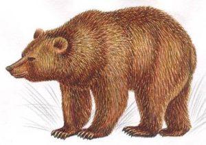 1-звериный-медведь