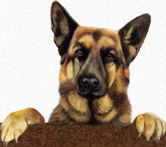 -звериный-пес